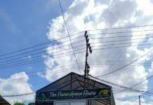 "Bangunan ""The Power Green House"". (Foto PLN)"